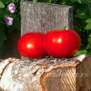 Сорт томата Драгоценность