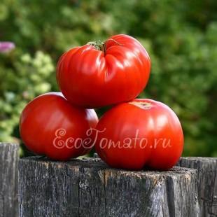 Бразильский Великан - крупноплодный красный томат