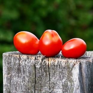 Сорт томата Французский Гибрид