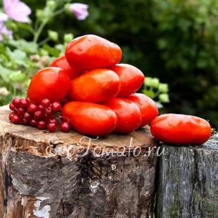 Сорт томата Французский Гроздевой