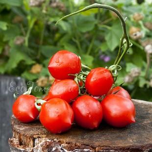 Сорт томата Geranium Kiss - Поцелуй герани