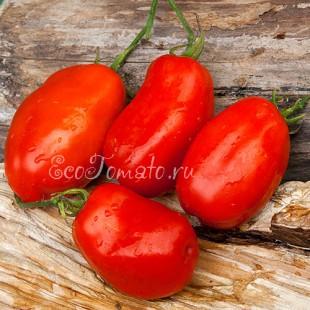 Сорт томата Giant Italian Paste (Гигантская итальянская паста), США
