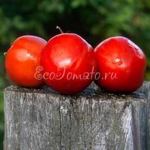 Сорт томата Граненые