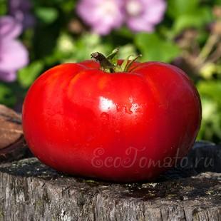 Сорт томата Grosse Cotelee (Гроссе Котеле), Франция