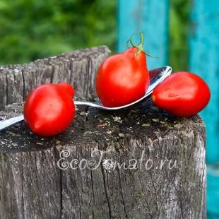 Сорт томата Грушовка