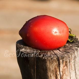 Сорт томата Итальянские Спагетти