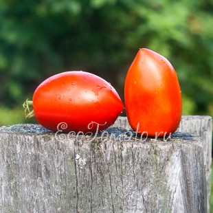 Сорт томата Kenosha Paste (Кеноша Паста, Кеноша Кулинарный), США
