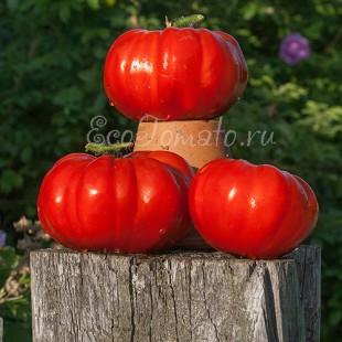 Сорт томата Червоне солнце (Красное солнце), Украина