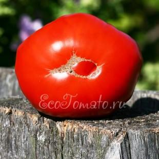 Красный гигант, крупноплодный сорт томата