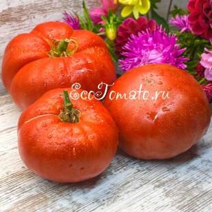 Сорт томата Кума