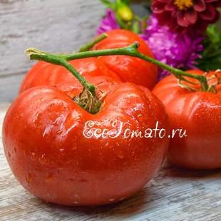 Сорт томата Куум, Украина