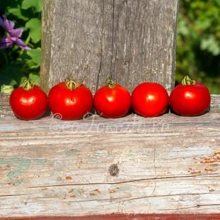 Сорт томата Large Red Cherry (Большой красный черри), США
