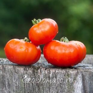 Сорт томата Marmande, Super Precoce