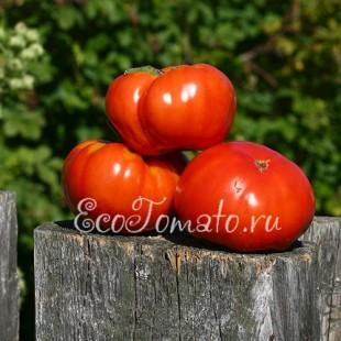 Сорт томата Медвежья Лапа, красный
