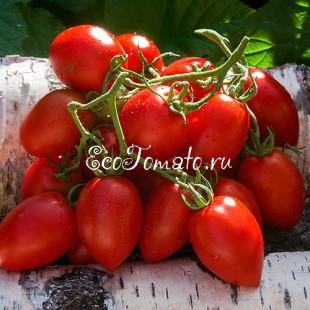 Сорт томата Миледи, Украина