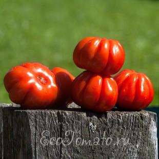 Сорт томата Морская Звезда