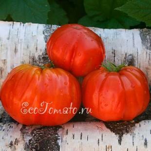 Сорт томата Nanni Bao (Нанни Бао), Италия