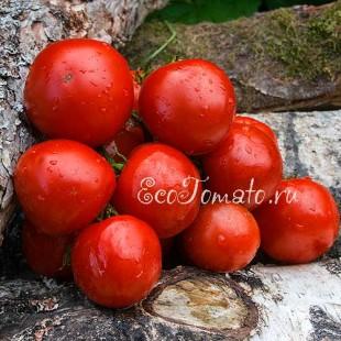 Сорт томата Novosadski Jabuchar (Новосадский яблочный), Сербия