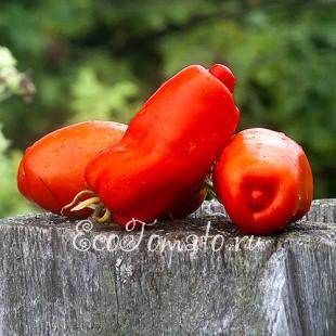 Сорт томата Opalka