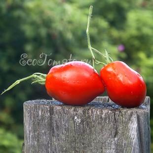 Сорт томата Perito Italian (Перито Италиан), США
