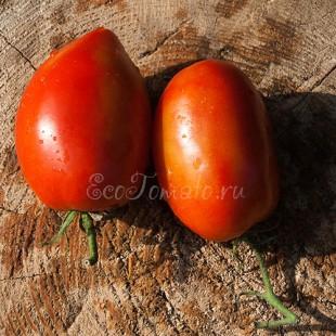 Сорт томата Pero Gigante (Перо Гиганте), Бельгия