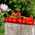 Red Pear (Красная груша), Италия