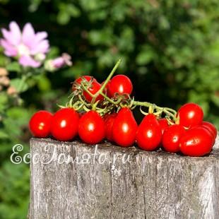Сорт томата Red Pear (Красная груша), Италия