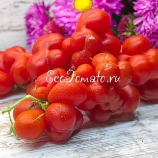 Сорт томата Reisetomate (Рейсетомат)