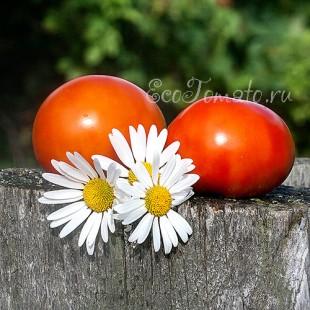 Сорт томата Русский красавец