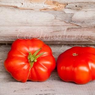 Сорт томата Shaker's Large Red (Большой красный Шейкера, США)
