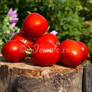 Сорт томата Слива огородная