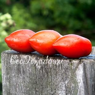 Сорт томата Сливки Крупные, Казахстан