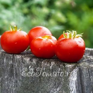 Сорт томата Stad tomate (Городской томат, Германия)