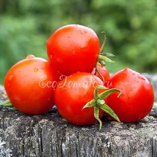 Сорт томата Tomatoberry (Томатоберри / Клубничка)