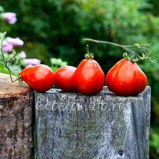 Сорт томата Трюфель Красный