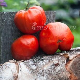 Сорт томата Украинский великан
