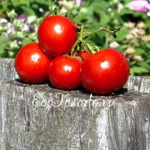 Сорт томата VF Gardener, США