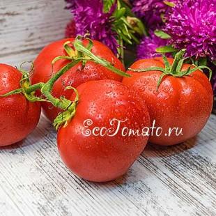 Сорт томата Владимир Высоцкий