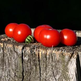 Сорт томата Белая Мечта