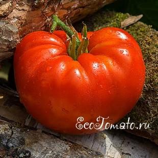 Сорт томата Woodland's giant (Лесной Гигант)