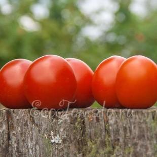 Сорт томата Де-барао, красный.