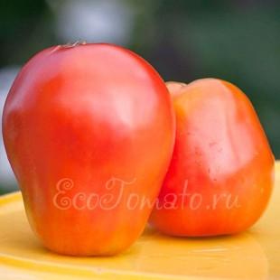 Сорт томата Гусиной яйцо