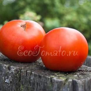 Якирото редкий сорт томата