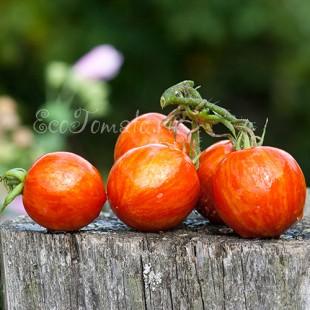 Сорт томата Амурский тигр