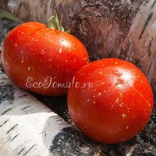 Сорт томата Бархатное дерево