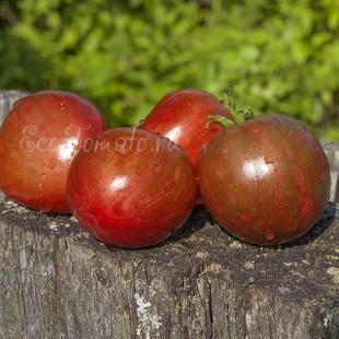 Сорт томата Blood Gulch (Кровавое ущелье)