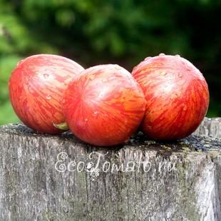 Сорт томата Большой розовый Вернисаж