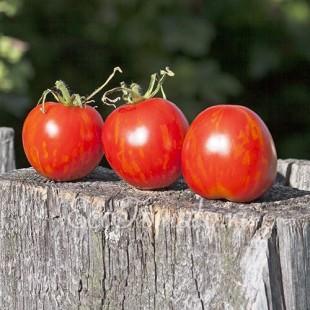 Сорт томата Де барао полосатый