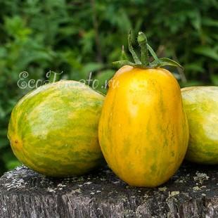 Сорт томата Golden Gates (Голден Гейтс, Золотые ворота), США