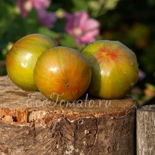 Сорт томата Green Copia (Зеленая Копиа), США